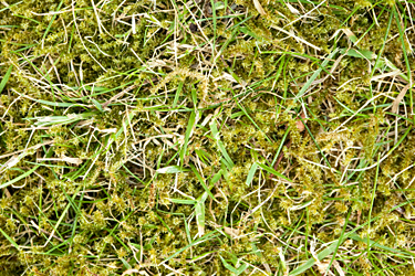 lawn care salcey group fertilisation scarification moss treatment weed treatment. Black Bedroom Furniture Sets. Home Design Ideas
